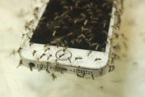 non-working mosquito app